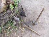 Des houes apportées par les enfants de l'école pour sarcler la cour ou le champ.