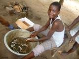 Préparation des grenouilles